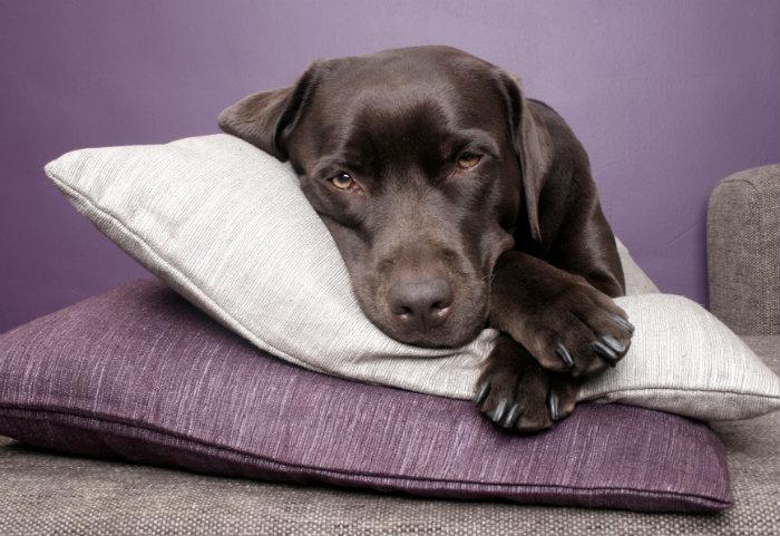 Pillow_700